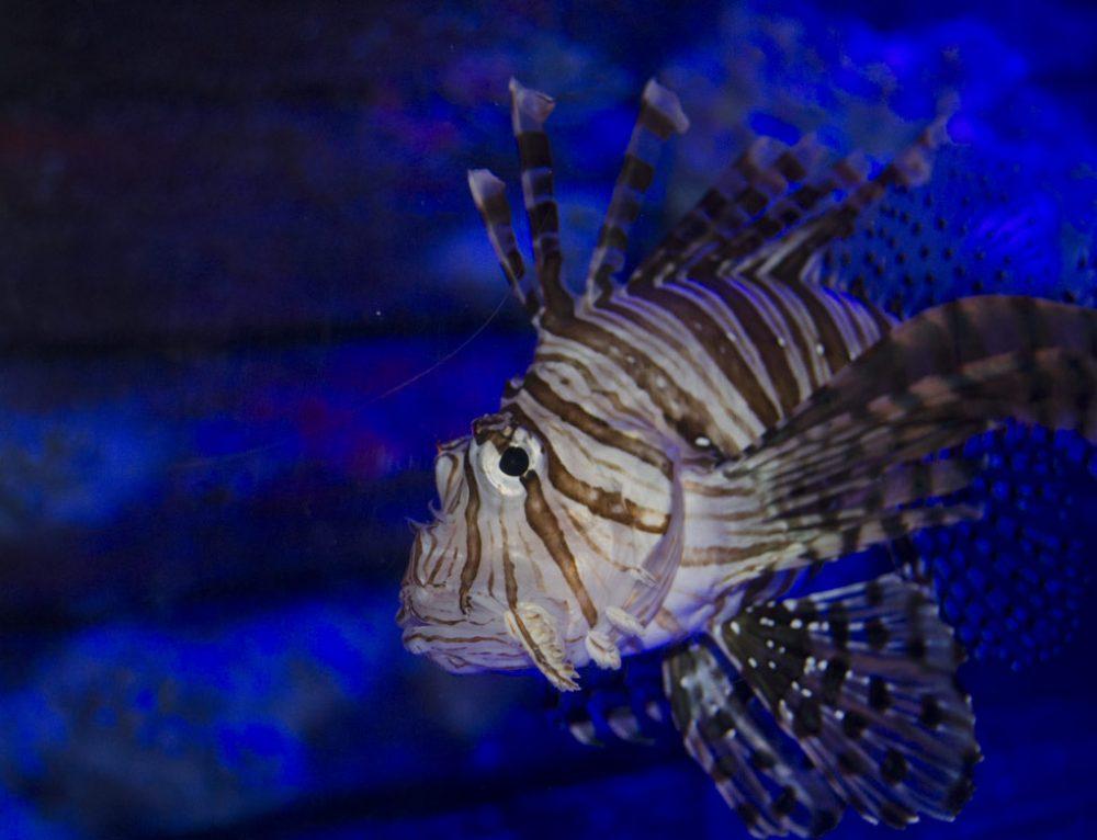 UnderWater World Sea Life Aquarium